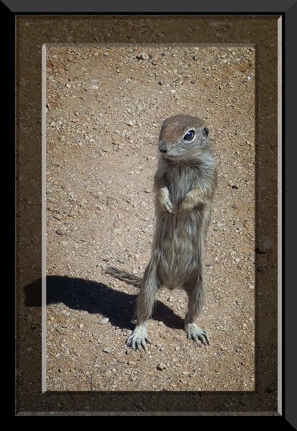 Ground Squirrel_20110309_1761 blog
