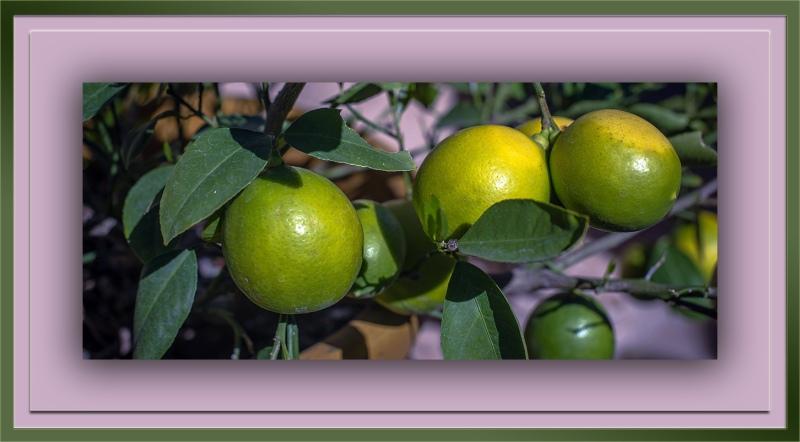 Lemons (1 of 1) blog