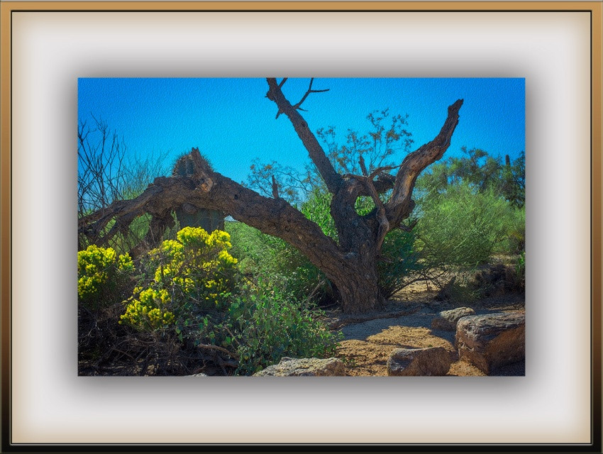 Sabino Canyon Scape (1 of 1) art II_edit blog