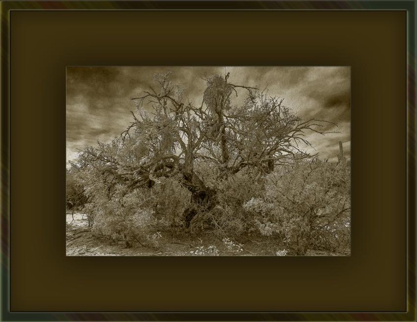 Tree B&W (1 of 1)-2 art sepia blog