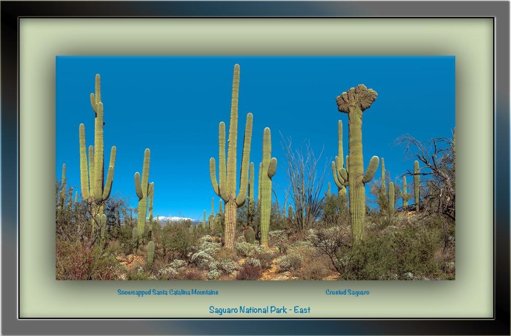 Chested Saguaro (1 of 1) blog