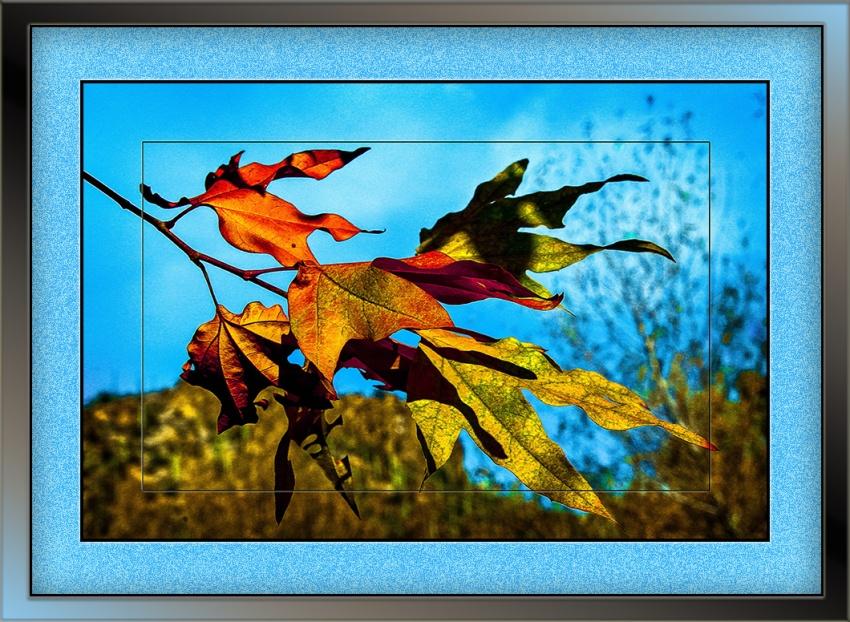 Leaves (1 of 1) blog