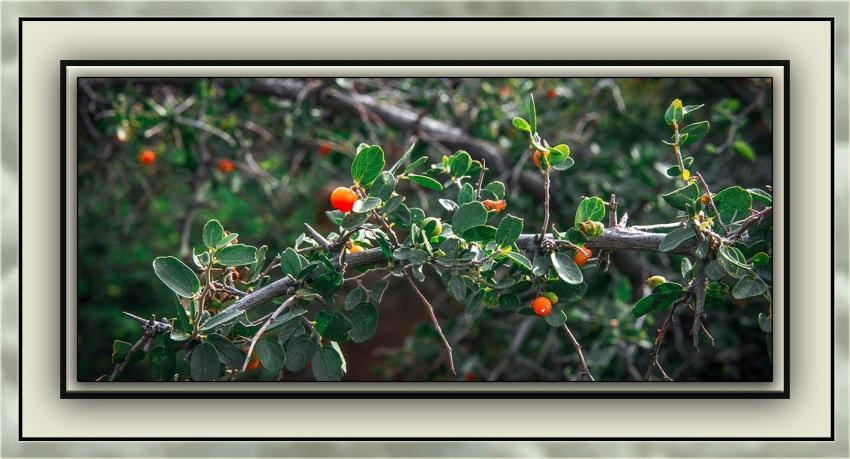 Milagrosa Loop (1 of 1)-24 Desert Hackberry blog