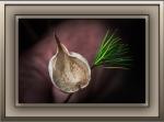 Milagrosa Loop (1 of 1)-33 Pine Leaf Milkweed Podblog
