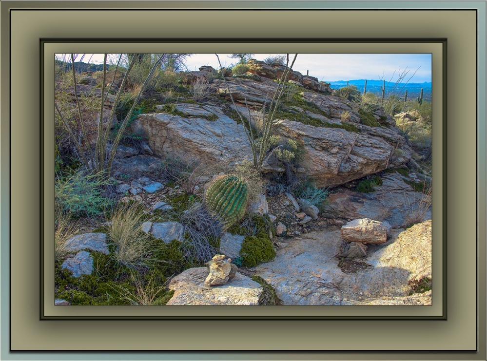 Milagrosa Loop - resurrection plants (1 of 1) blog