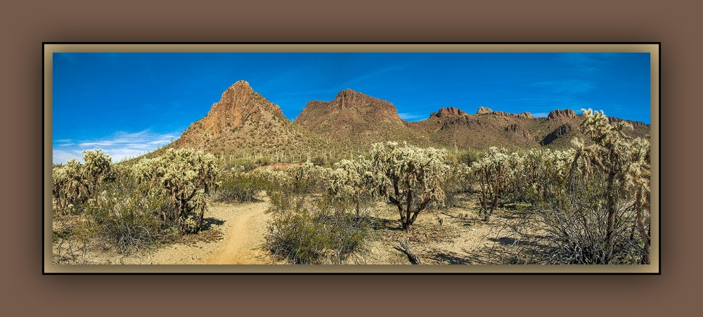 Pather Peak Cholla Forest Panorama (1 of 1) blog