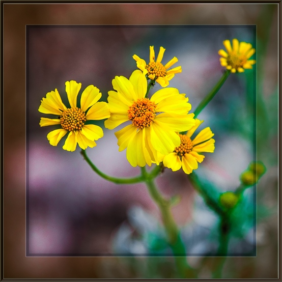 Ventana Canyon Trail (1 of 1)-2 blog