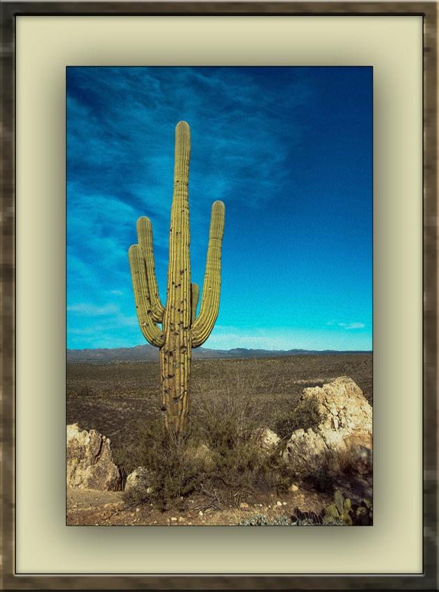 saguaro (1 of 1)-2 On Convas blog