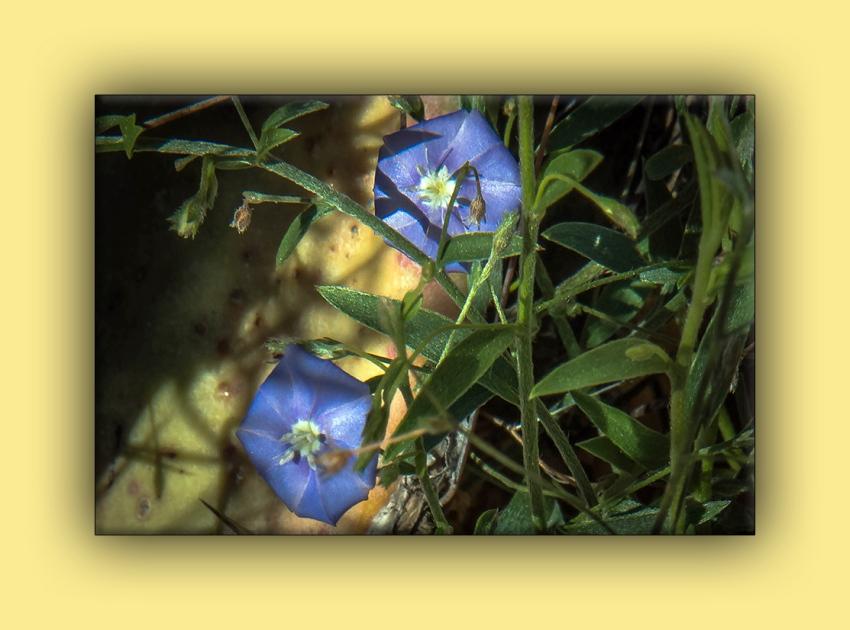 Arizona Blue Eyes (1 of 1)-2 blog