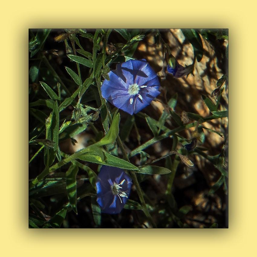 Arizona Blue Eyes (1 of 1) -2 blog