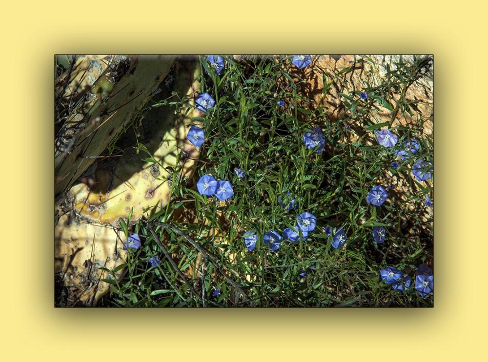 Arizona Blue Eyes (1 of 1) blog