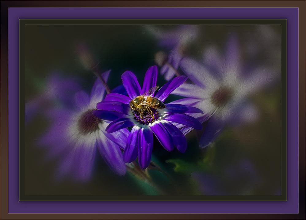 Bee on Patio Flower (1 of 1) Framed blog