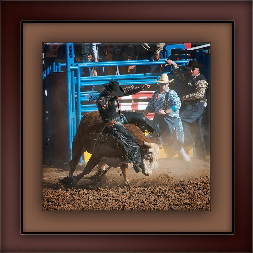 Bull Riding-0386 blog