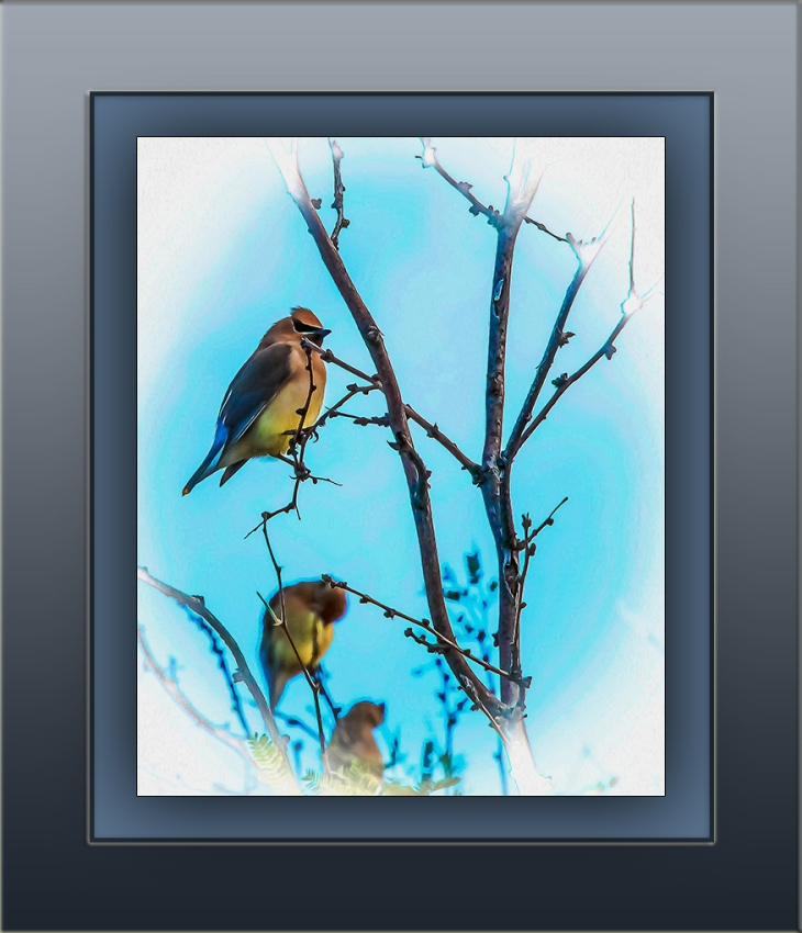 Cedar Waxwing Painting (1 of 1) art blog