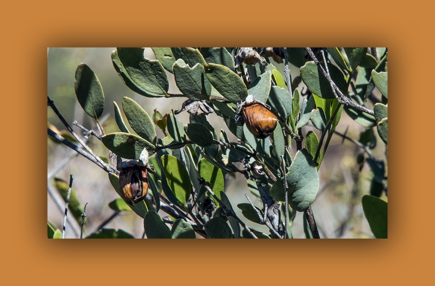 jojoba (1 of 1) female blog