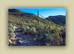 Pima Canyon (1 of 1)-2 blog