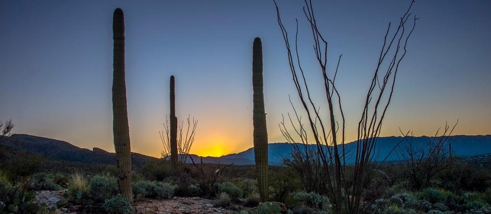 Sunrise (1 of 1)-5blog