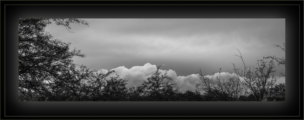 Tanque Verde Wash (1 of 1)-6 Treetop Clouds blog