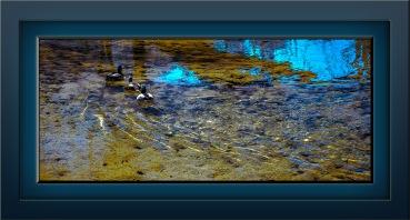 Ducks at the Dam (1 of 1) art blog