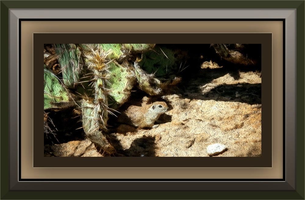 ground squirrel (1 of 1) blog art