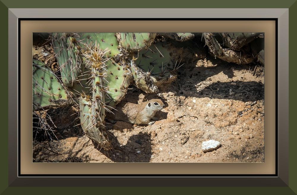 ground squirrel (1 of 1) blog