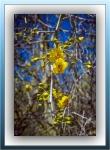 Palo Verde Blossoms (1 of 1)-3blog