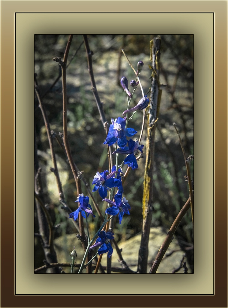parish larkspur (1 of 1)-2 blog