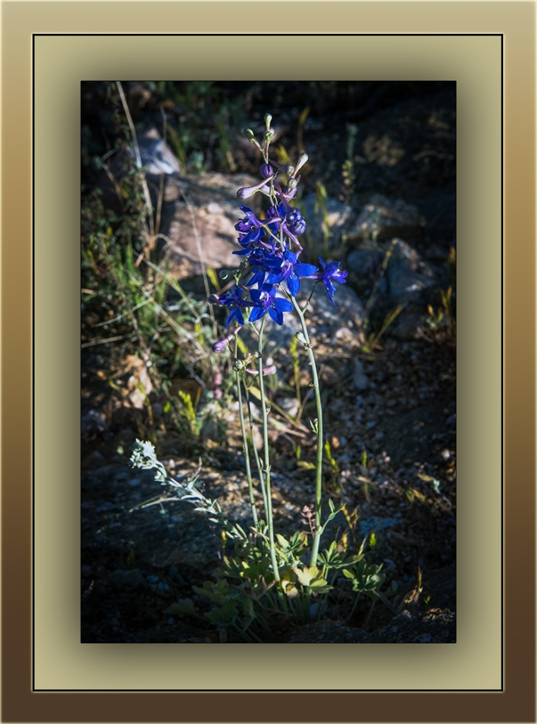 parish larkspur (1 of 1) blog