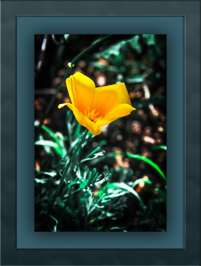 Poppy (1 of 1)-2 blog