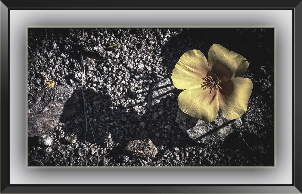Poppy Shadows (1 of 1)_Art blog