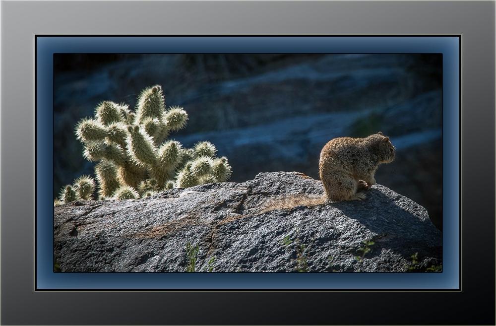 Rock Squirrel (1 of 1)-2 blog