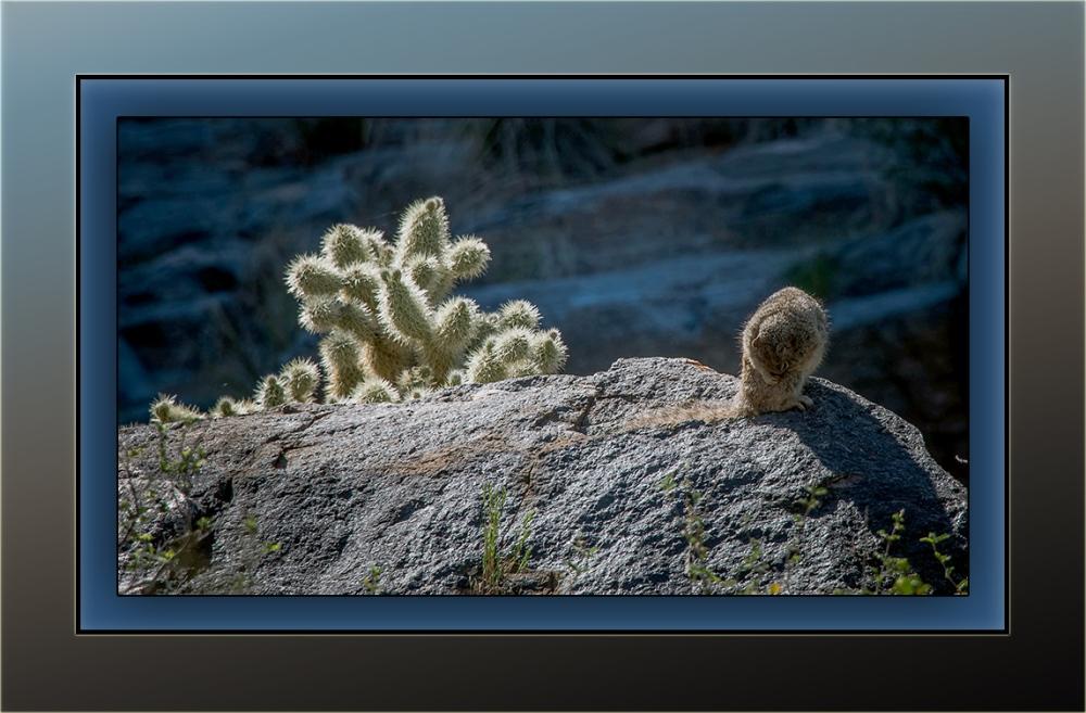 Rock Squirrel (1 of 1) blog