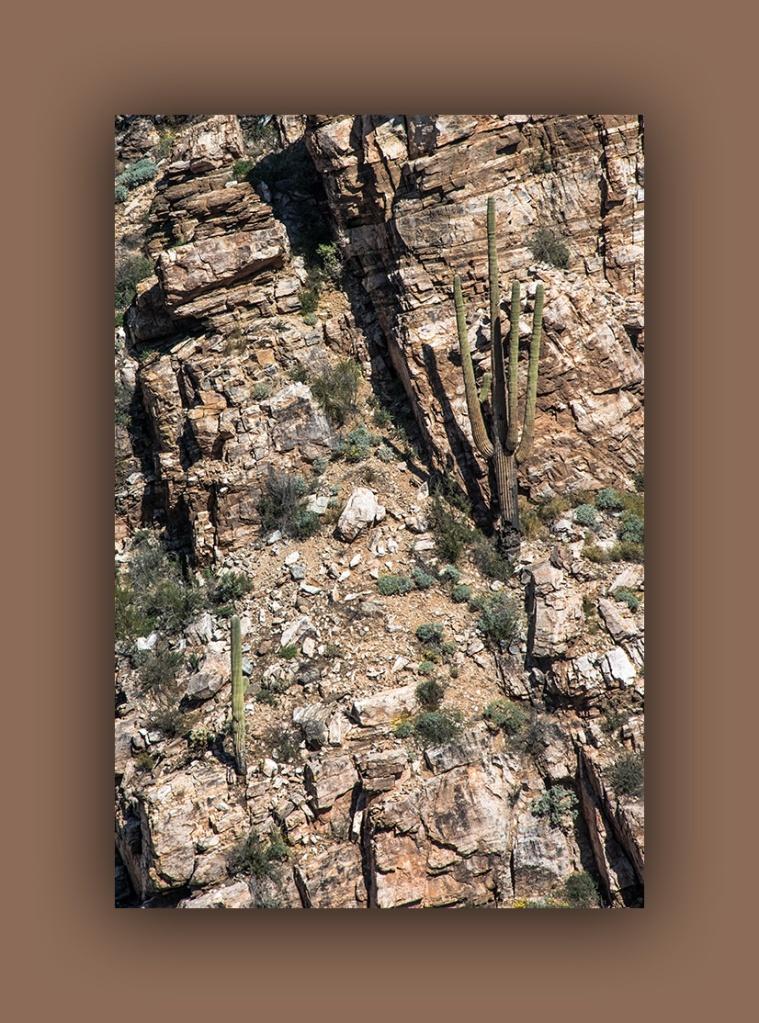 Saguaro Cliff Dweller (1 of 1) blog