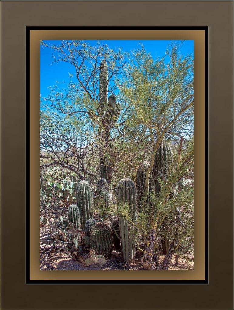 Saguaros (1 of 1) blog
