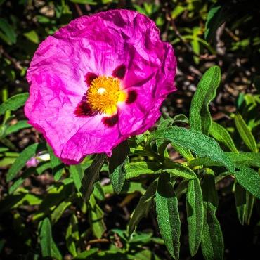 Spring Yard Flowers (1 of 1)-4 blog