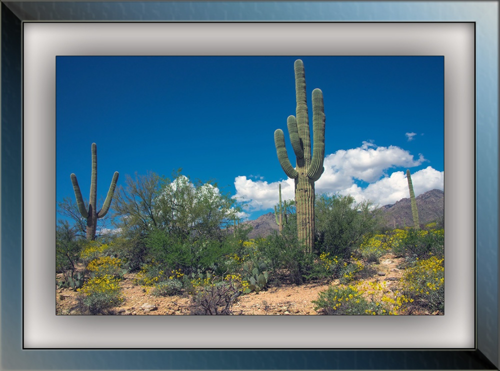 Springtime in Sabino Canyon (1 of 1) blog