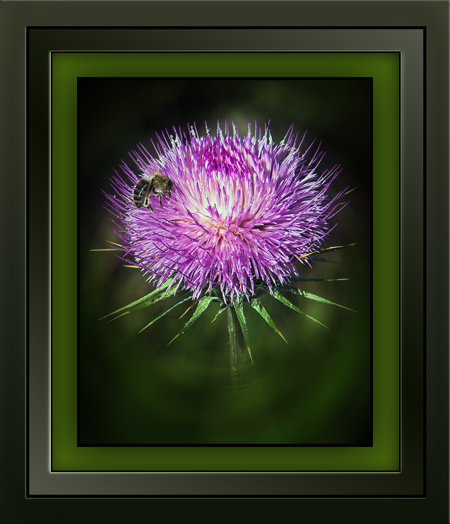thistle & bees (1 of 1)-2 blog