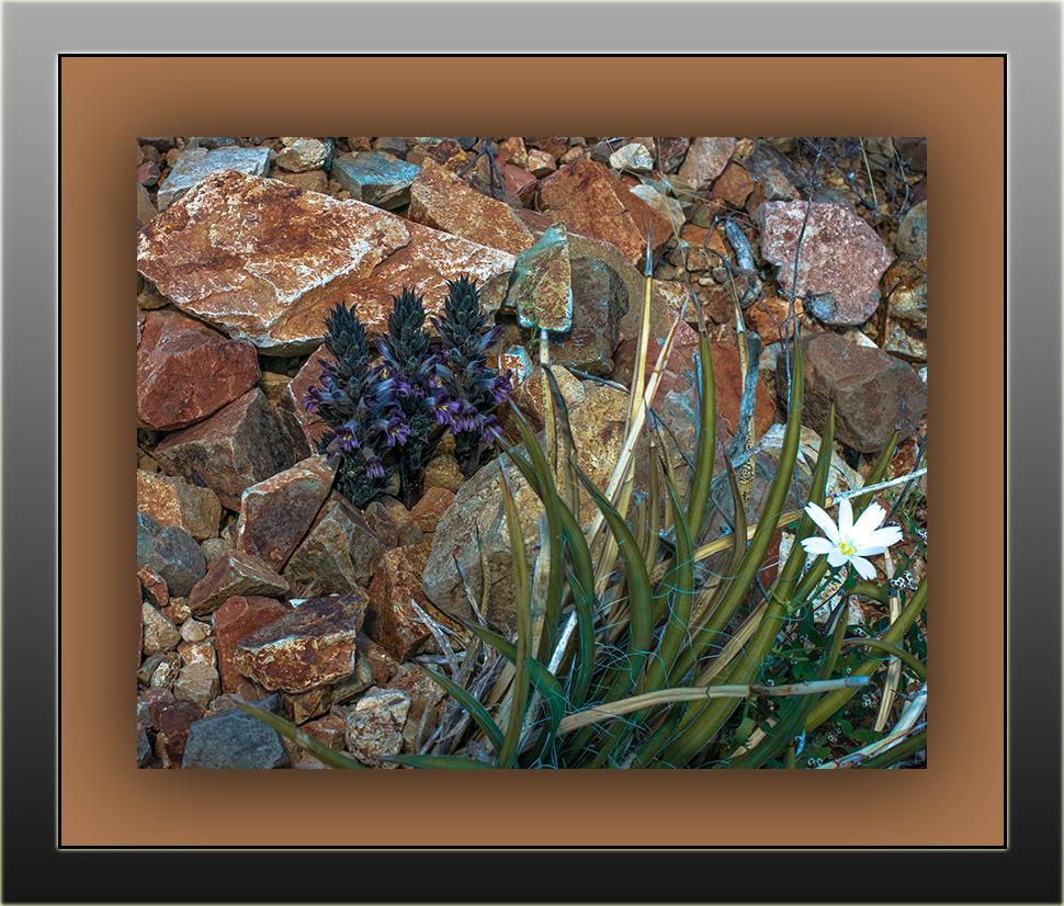 Wildflowers (1 of 1)-15 blog framed