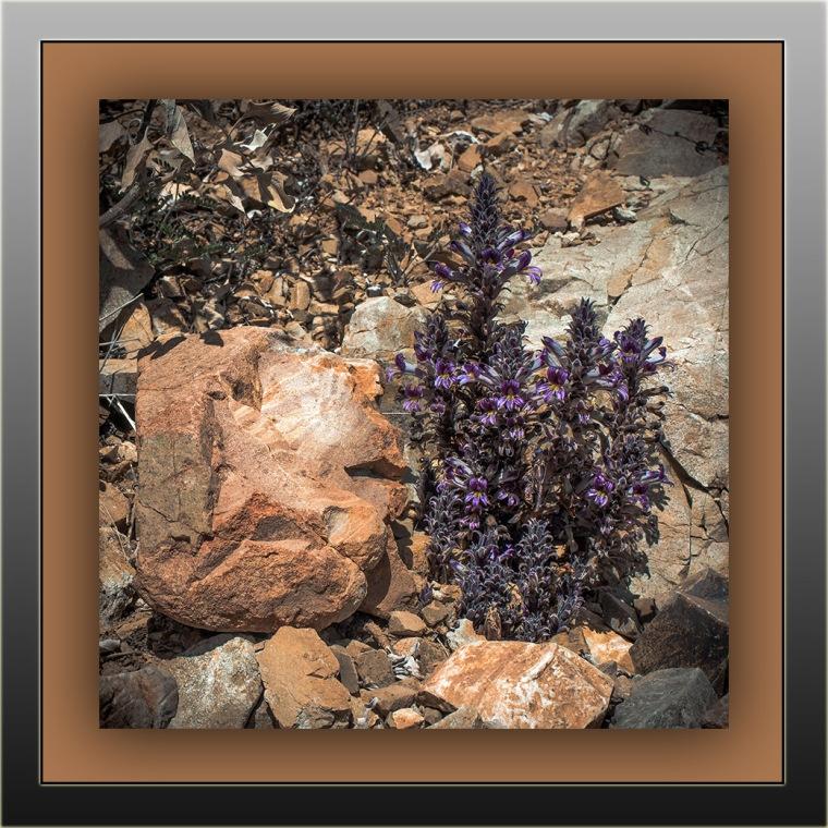 Wildflowers (1 of 1)-16 blog framed