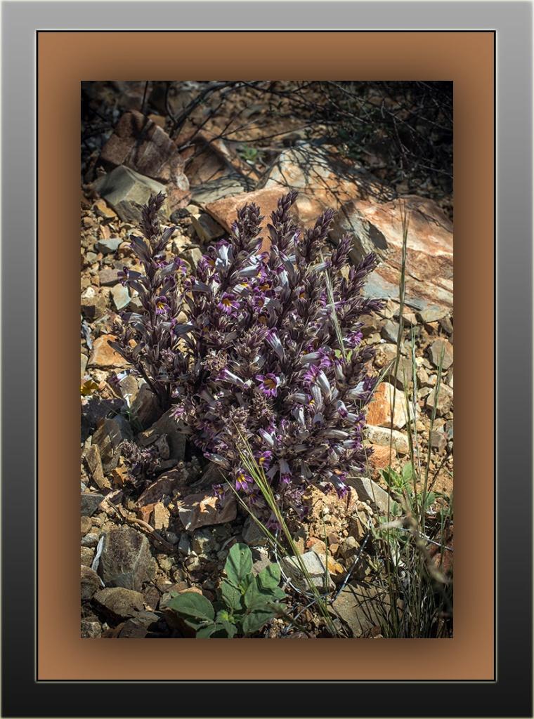 Wildflowers (1 of 1)-17 blog framed