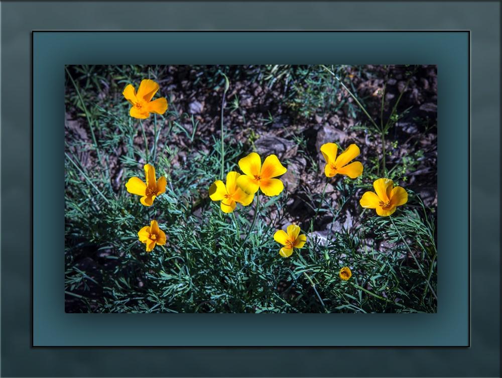 Wildflowers (1 of 1)-2 blog