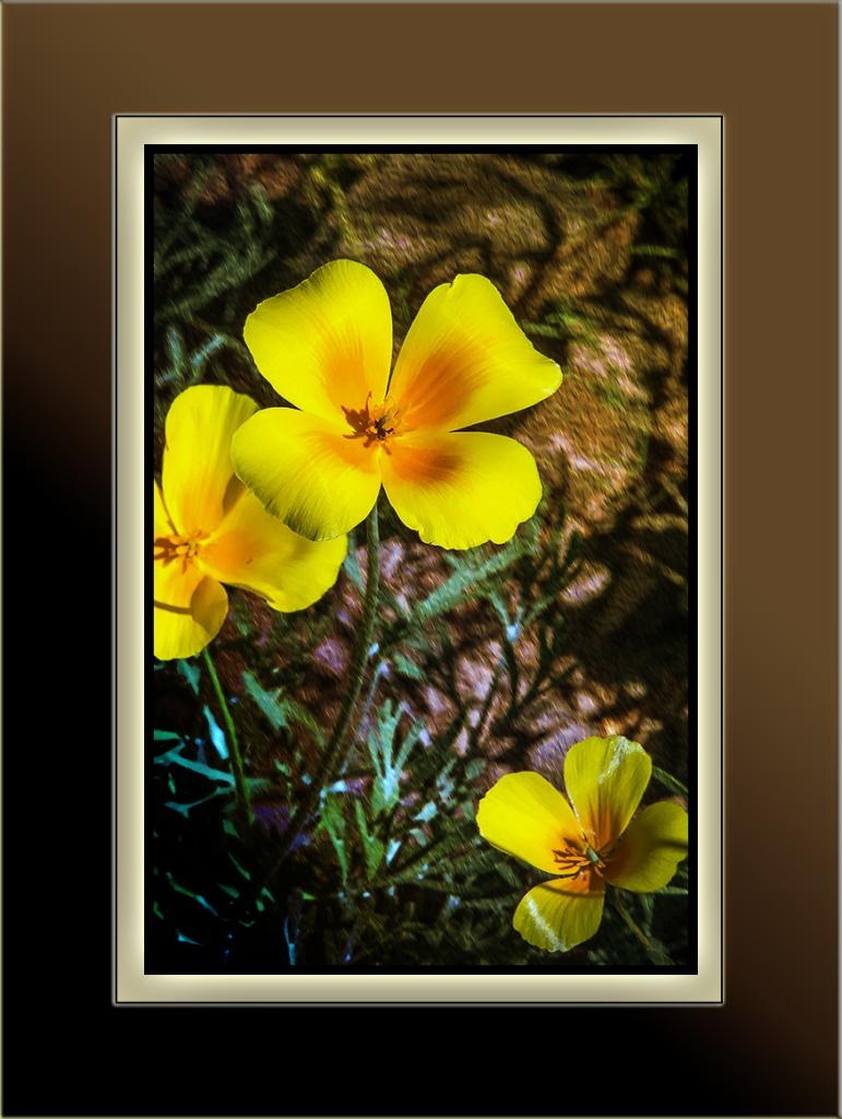 wildflowers (1 of 1)-34 Poppies Art blog