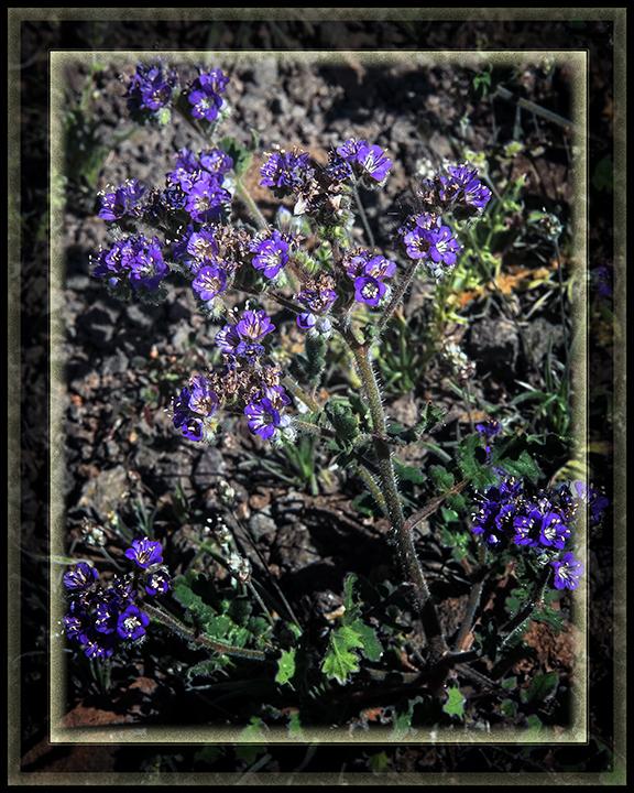 wildflowers (1 of 1)-35 framed blog