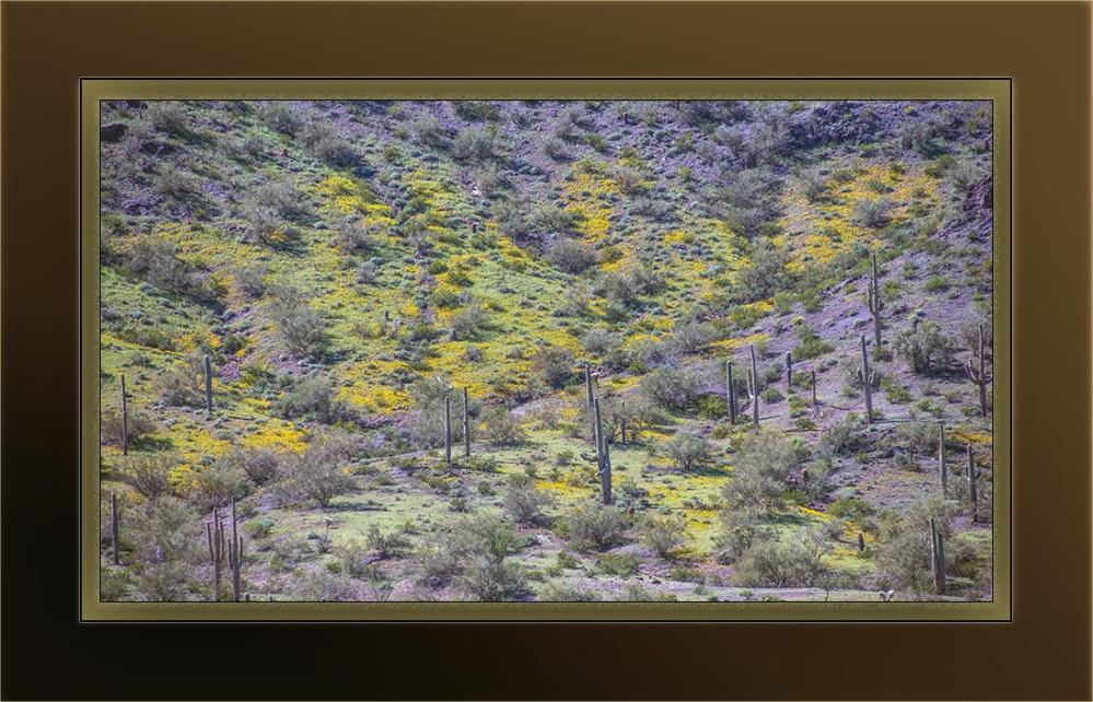 wildflowers (1 of 1)-45 poppies blog