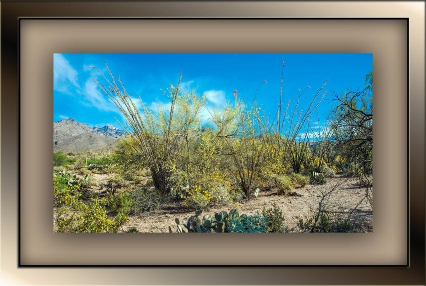 Blooming Sabino Canyon (1 of 1 blog)