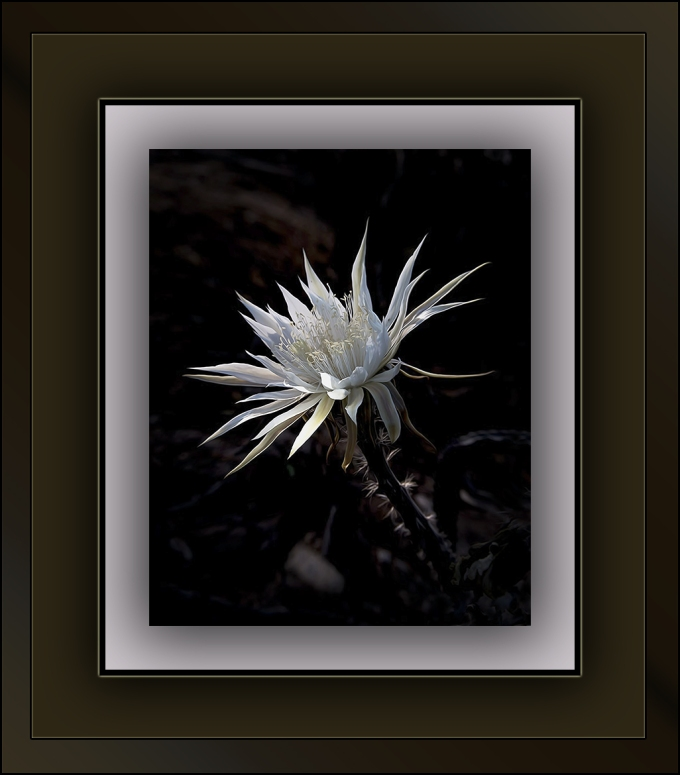 Night-Blooming Cereus blog