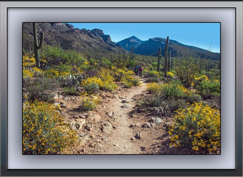 SCVN Hikers (1 of 1) blog