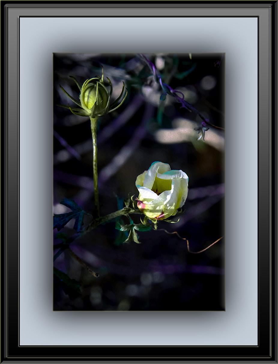 Wildflower (1 of 1) art blog