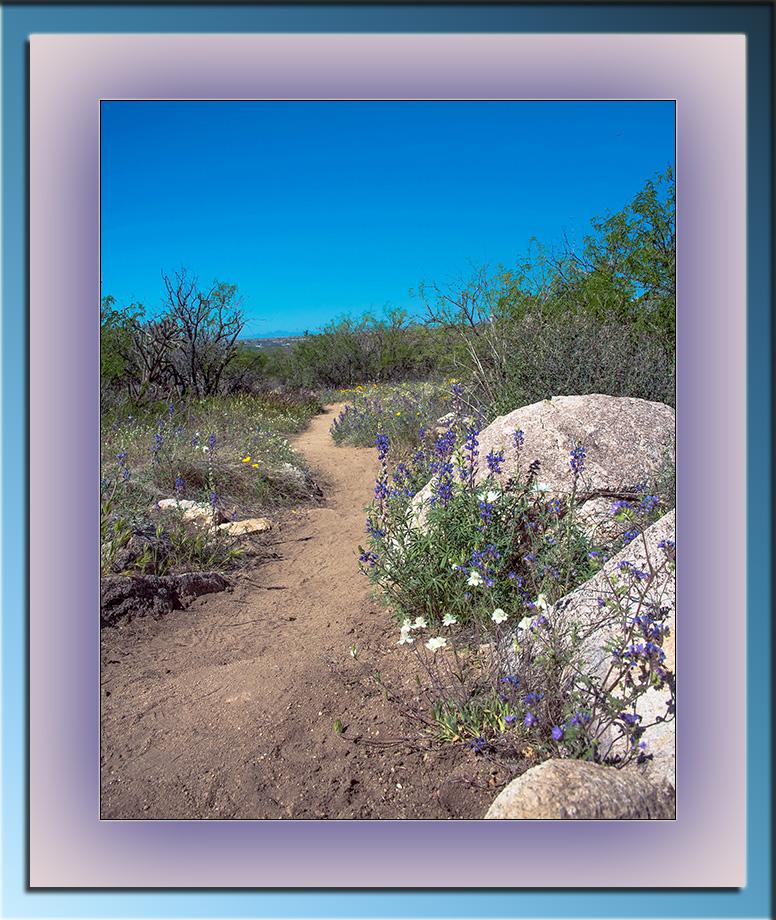 Wildflowers (1 of 1)-3 blog