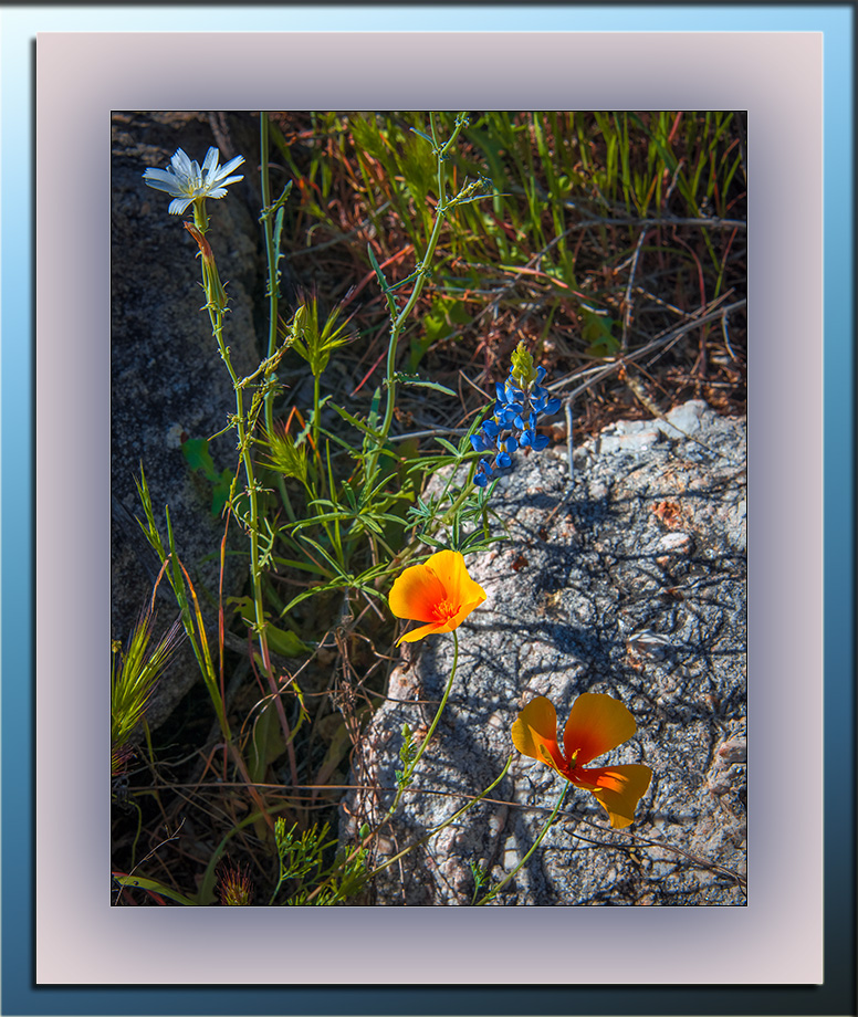 Wildflowers (1 of 1)-4 blog